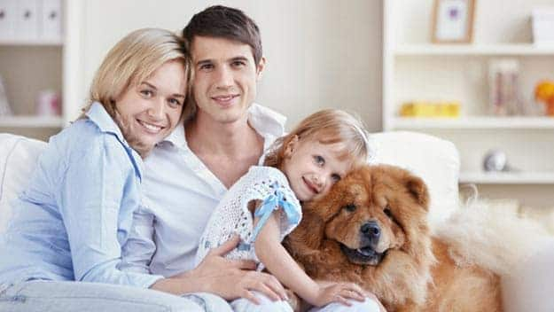 Wills & Trusts dog-young-family Direct Wills Hampton in Arden